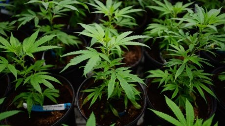 Pot stocks: Is now the time to invest in medical marijuana?
