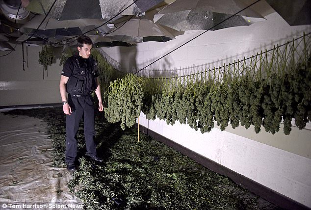 Not Messing Around. Three Brits Admit to Turning Nuclear Bunker into Huge Cannabis Factory.