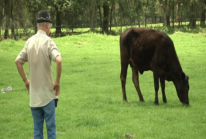 Polk County deputies arrest group of men accused of stealing cows