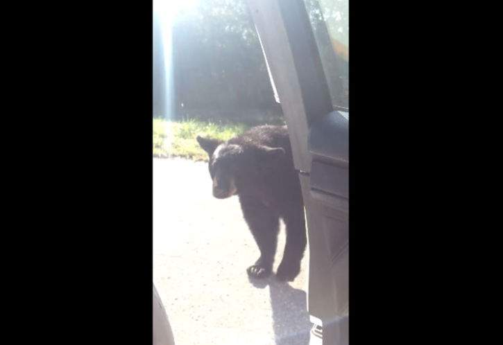 Video: Wandering bear pays visit to Florida deputy: