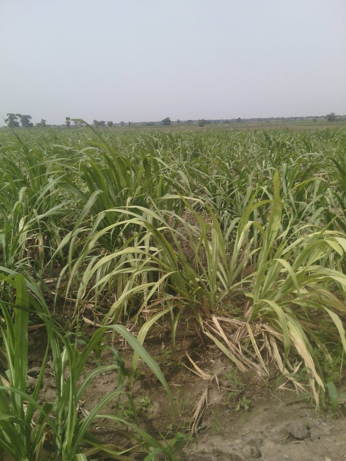 NpowerNG Agro