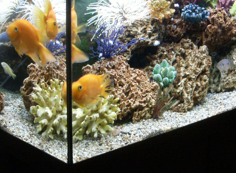How a fish tank helped hack a casino #cio #infosec #iot -