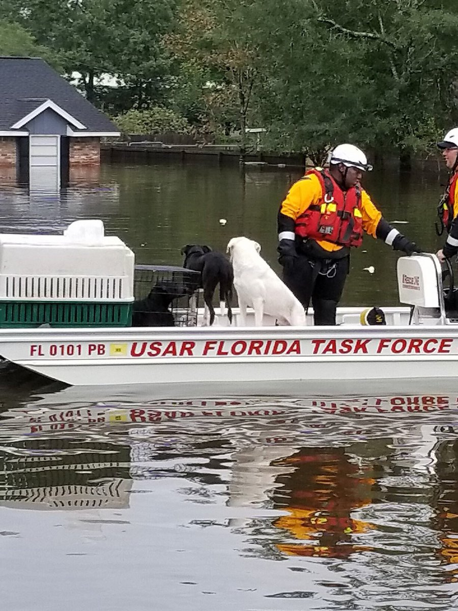.@StPeteFR crews save animals in Harvey relief efforts