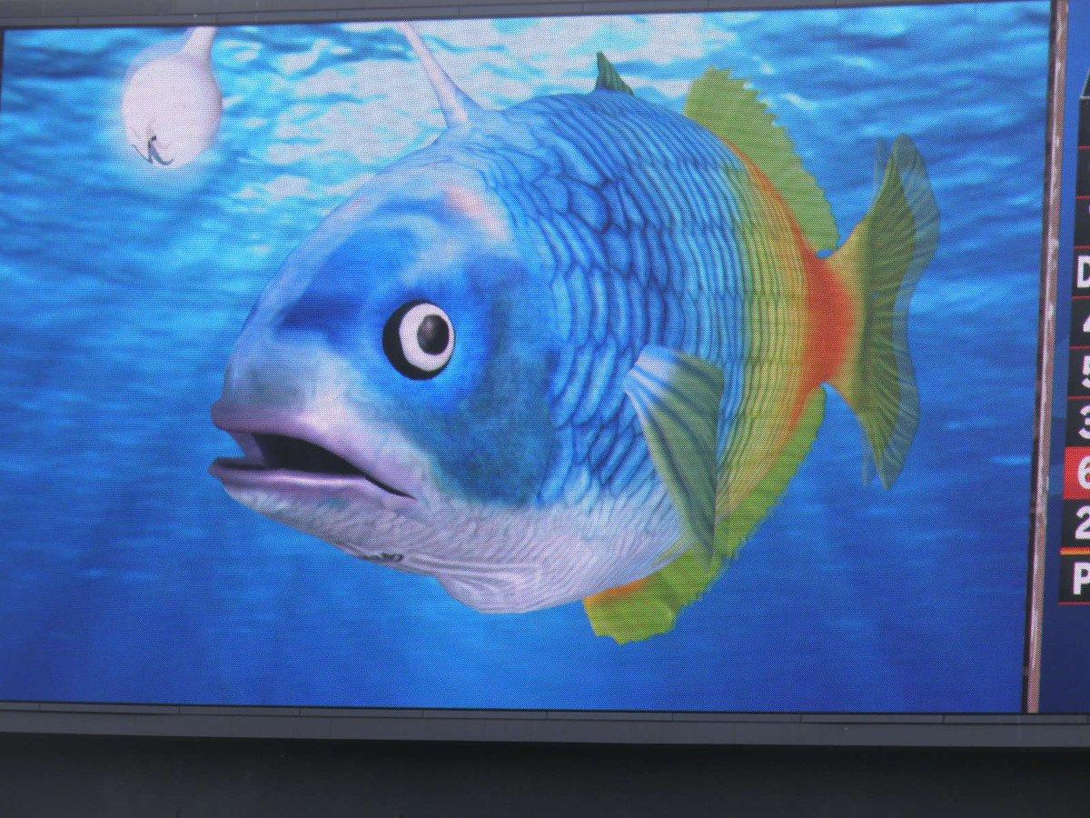 test ツイッターメディア - 謎の魚第1形態から第2形態 そして第3形態へと変わる瞬間!  #せっかくなので謎の魚とクロワシさんとふうさんの画像つき目撃情報で3連休を混乱に陥れよう https://t.co/FvNwsLwG1B