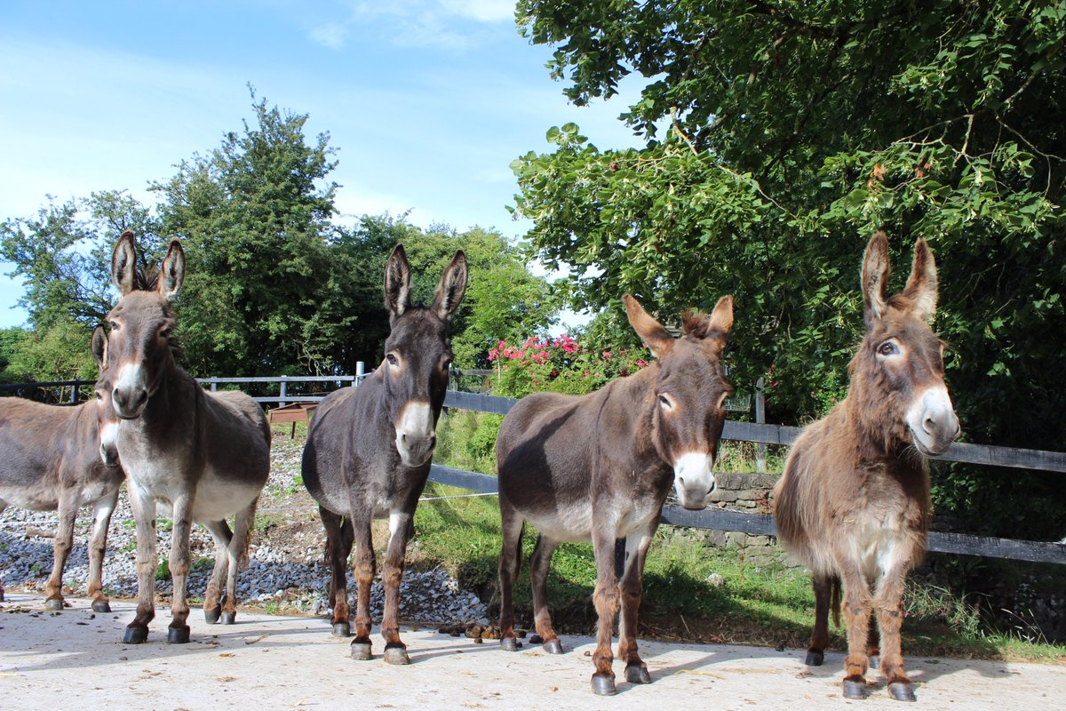 "DonkeySanctuary EIRE on Twitter: ""Meet The Waltons! This group of ..."