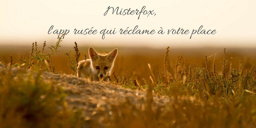 Misterfox, le renard qui reclame les retard de livraison d Amazon