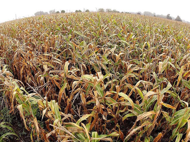 Mother leaves behind toddler in corn maze. Doesn't realize it til the next morning. Story >>