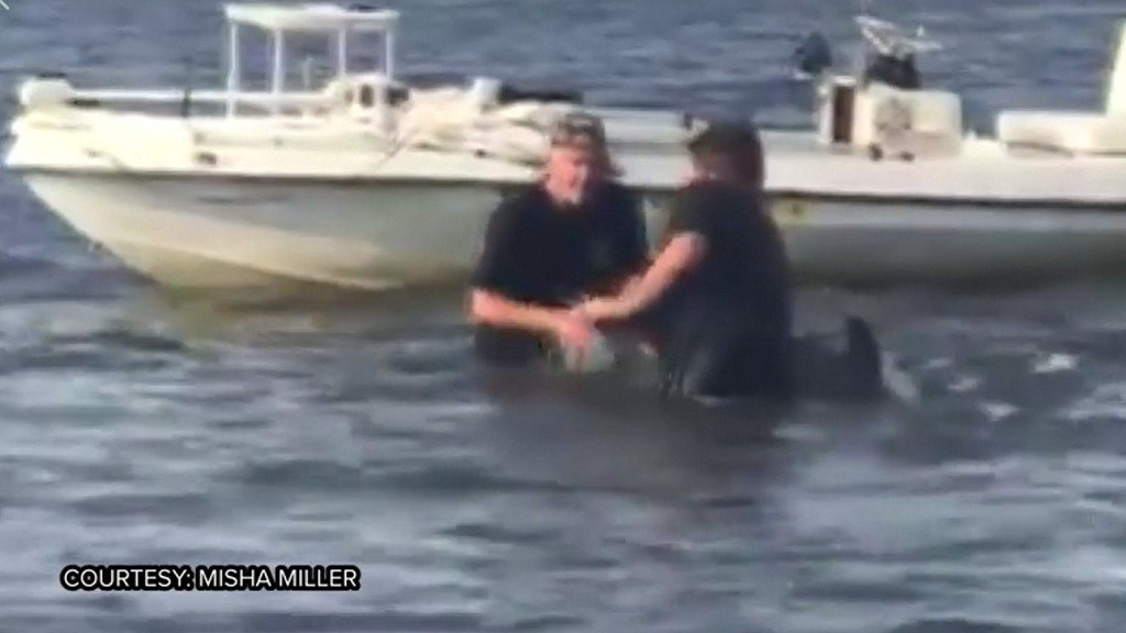WATCH: Two men rescue baby dolphin stuck in crab trap