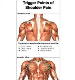 tha muscle whisperer on twitter if you have shoulder pain tightness contact me tha muscle whisperer painfixtherapy https t co jsqcabaejf stop being in  [ 771 x 1200 Pixel ]