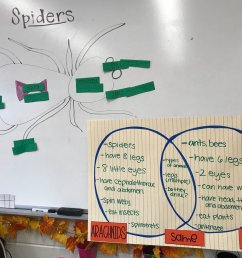 ms weisman on twitter ss connect ela and science by reading a book on facts about spiders to label the parts compare contrast them to insects  [ 1200 x 900 Pixel ]
