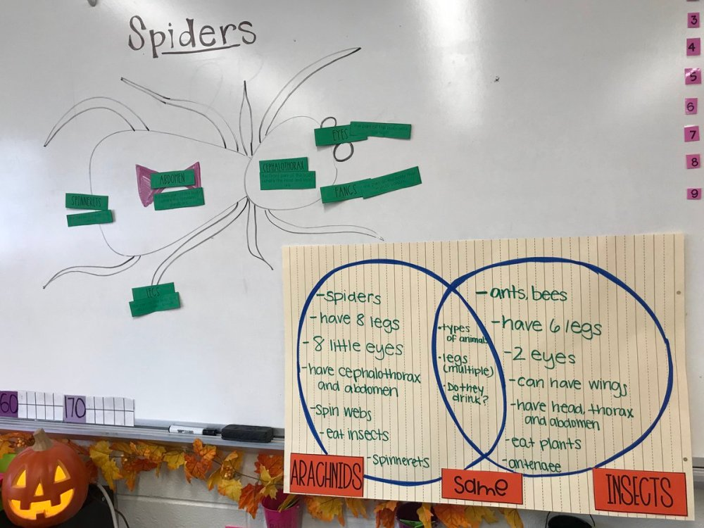 medium resolution of ms weisman on twitter ss connect ela and science by reading a book on facts about spiders to label the parts compare contrast them to insects