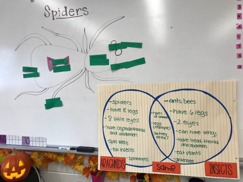 small resolution of ms weisman on twitter ss connect ela and science by reading a book on facts about spiders to label the parts compare contrast them to insects