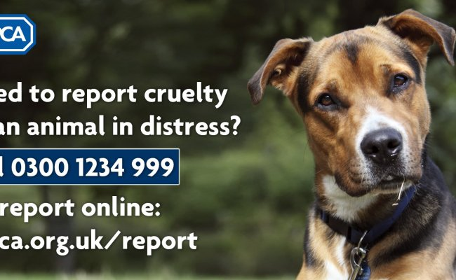 Rspca England Wales On Twitter Need To Report