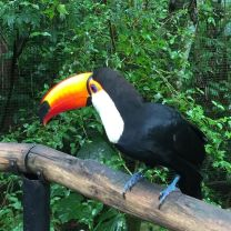 Image result for VISIT THE BIRD PARK brazil