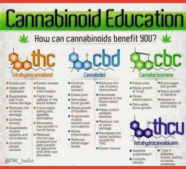 "Thc-india Twitter ""#thc India Cannabinoid Education"