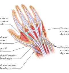 remco merkestijn on twitter been having left hand issues for weeks left hand tendons diagram [ 1024 x 905 Pixel ]