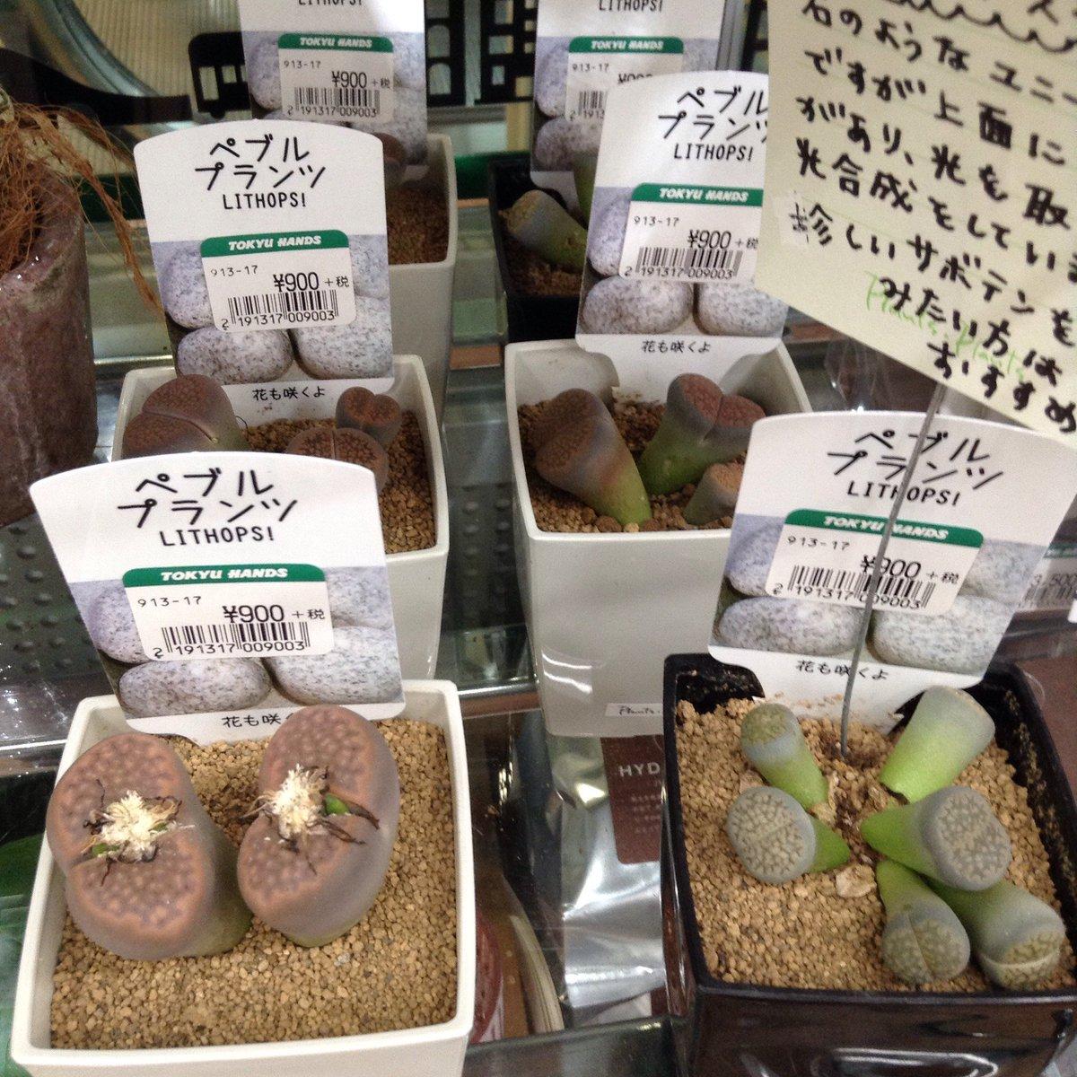 壁紙無料花: 新宿 多肉 植物