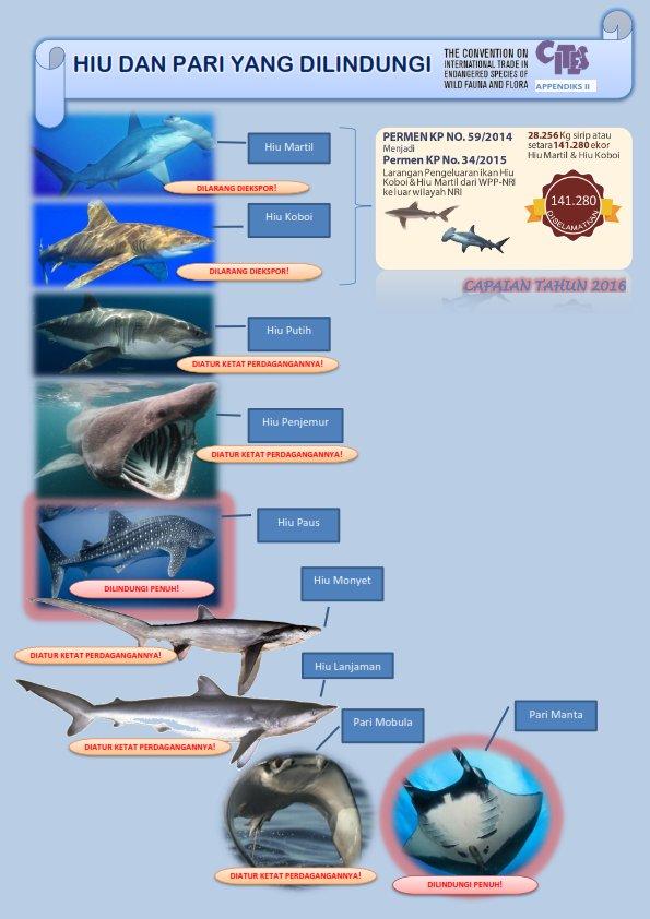 Jenis Ikan Pari : jenis, Andhika, Prasetyo, Twitter:,