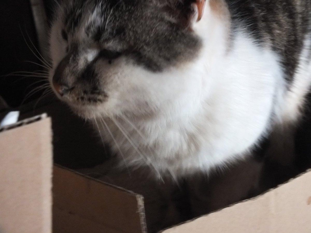 test ツイッターメディア - さっき、夜中のお湯をもっていったら小屋におじちゃんがいませんでした。最近、夜は必ず小屋にいたのに。フードを足して、お湯も置いてきました。2月は悲しいことが多いですね。大杉漣さんの突然の不幸にもびっくり。猫好きの優しい方の印象が強かった。ご冥福をお祈りしたいです。 https://t.co/noUuToz8QH