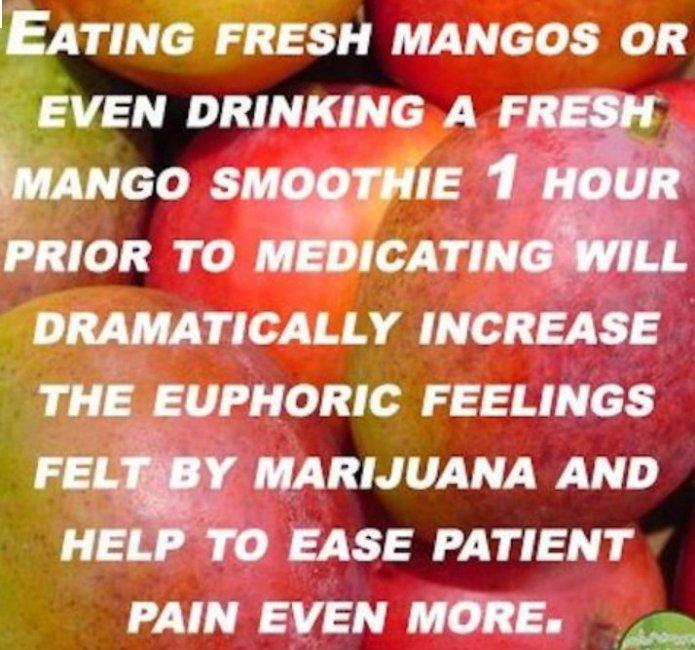 Image result for mango marijuana