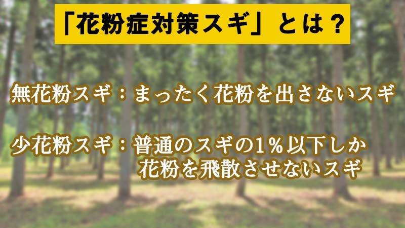 test ツイッターメディア - 【スギ花粉】林野庁によると「無花粉スギ」「少花粉スギ」への植え替えが進んできているそうですが、すべてのスギ林を花粉症対策スギに転換するのは相当の長期間が必要とのこと。https://t.co/7bPFrrrZ3D https://t.co/k4psZu7QDl