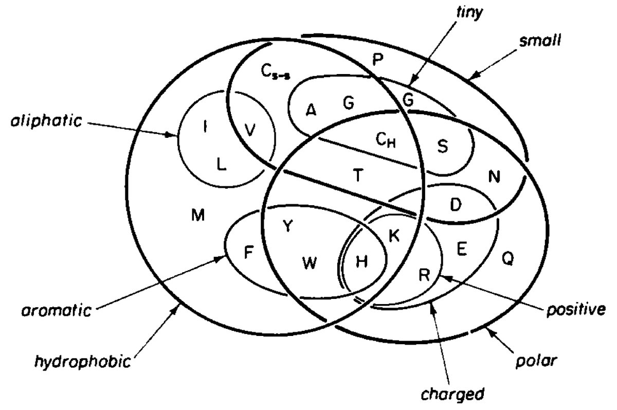 hight resolution of check out this awesome venn diagram of amino acid properties from a classic paper the amino acids closer together exchange frequently