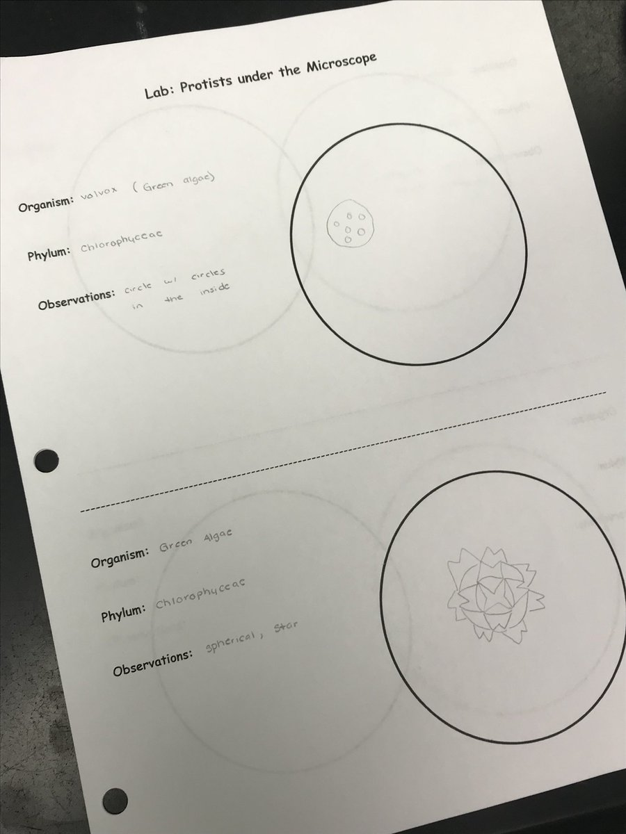 medium resolution of natalie dorman on twitter biology 2 students used microscopes to classify plant like animal like protists in pond water ahsengagement