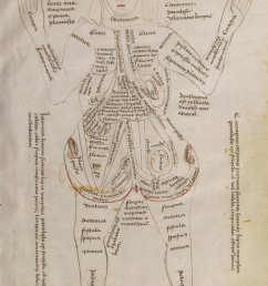 a 15th century diagram of a pregnant woman her body covered with descriptions of its different parts and potential diseases  [ 774 x 1200 Pixel ]