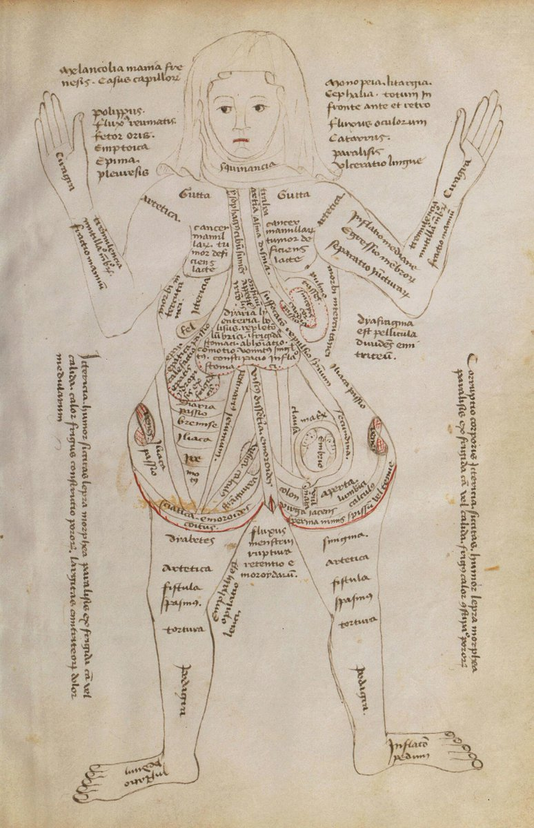 hight resolution of a 15th century diagram of a pregnant woman her body covered with descriptions of its different parts and potential diseases