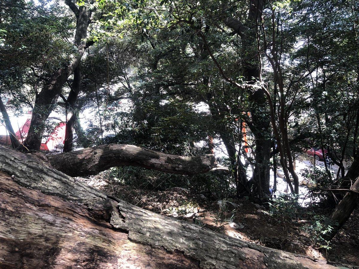 test ツイッターメディア - ハイキングと言う名の修行もそろそろ終盤、目下に伊豆山神社の鳥居が見えて来ました。#ひとり旅  #熱海 #伊豆山神社 https://t.co/UaA3Y1pUlN
