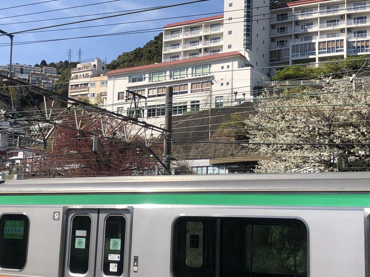 test ツイッターメディア - 来宮駅のホームに降り立つとぐっと旅行感が増す。 駅のホームから伊豆山神社の赤白の龍ならぬ紅白の桜がお出迎え。 #ひとり旅 #熱海 #来宮駅 https://t.co/ZthHMbX3Y0