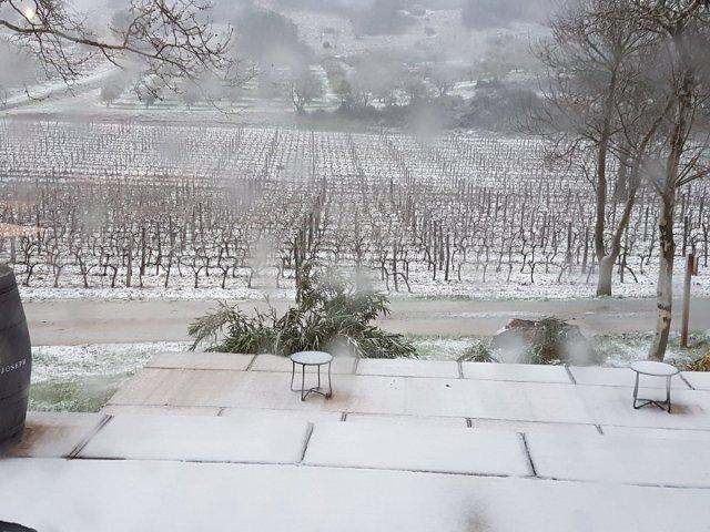 Vines at Calmel & Joseph in the snow!