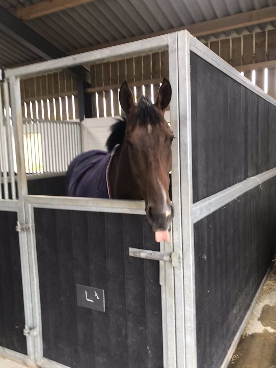 Emma Lavelle Racing | National Hunt Trainer | Racehorse Training