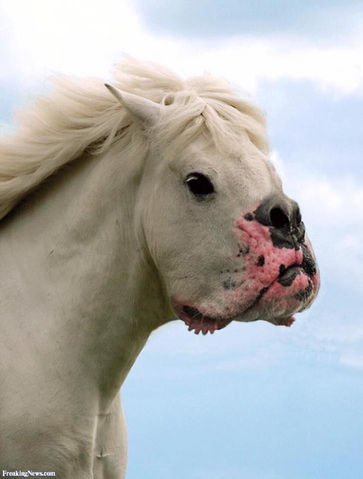 Horse With A Dog Mouth : horse, mouth, EMZOTIC, Twitter:, Horses, Mouths…