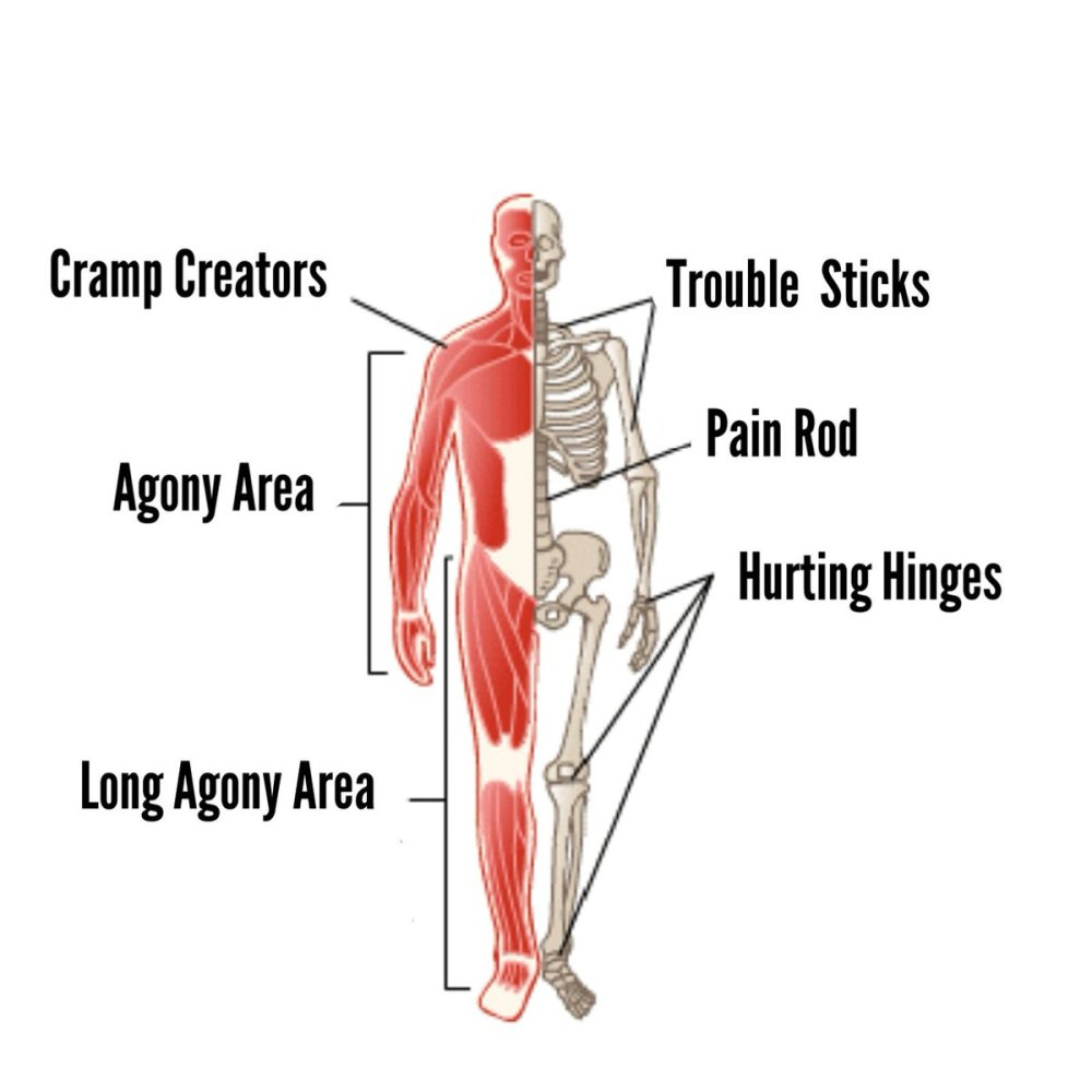 medium resolution of schematic drawing of the human body the shoulder muscles are labelled as cramp creators