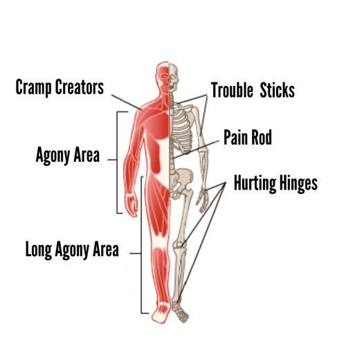 small resolution of schematic drawing of the human body the shoulder muscles are labelled as cramp creators