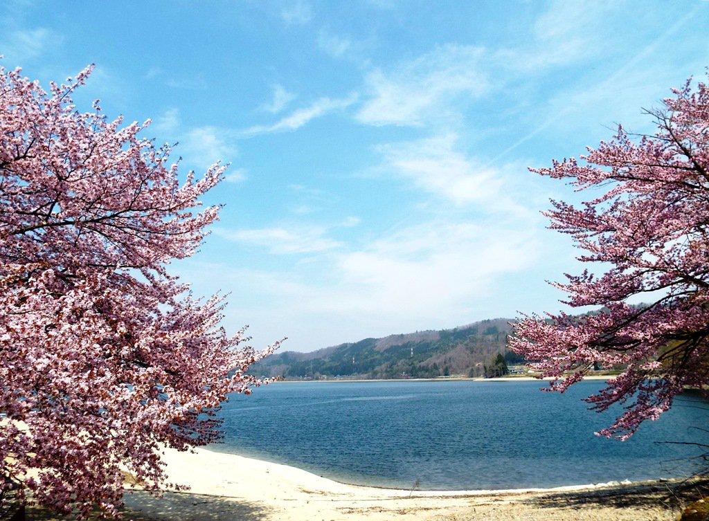 test ツイッターメディア - #長野の風景、#長野の自然、#桜、#大町市。仁科三湖の一つ青木湖を満開の桜越しに見た(昭和電工青木発電所付近で一昨日撮影)。 https://t.co/asvY0693NK
