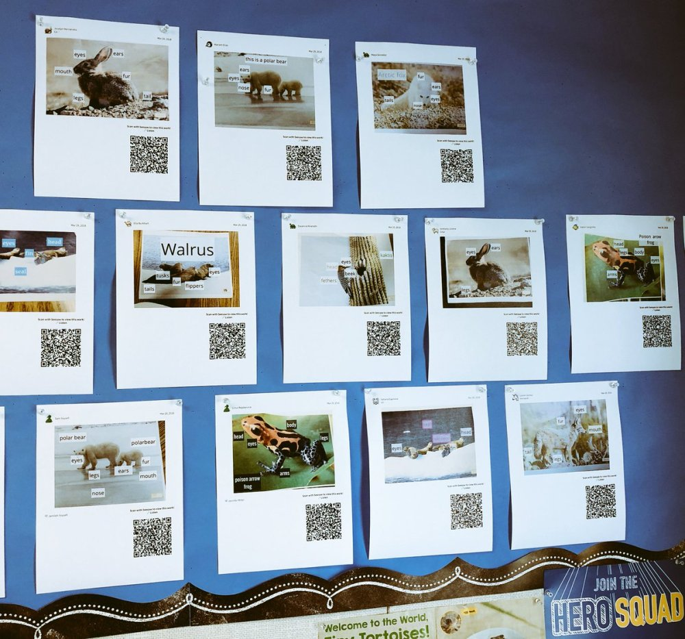 medium resolution of  in 1st grade at lynhaven traditional student work wall becomes interactive had fun listening to student s explain their diagrams via qr codes