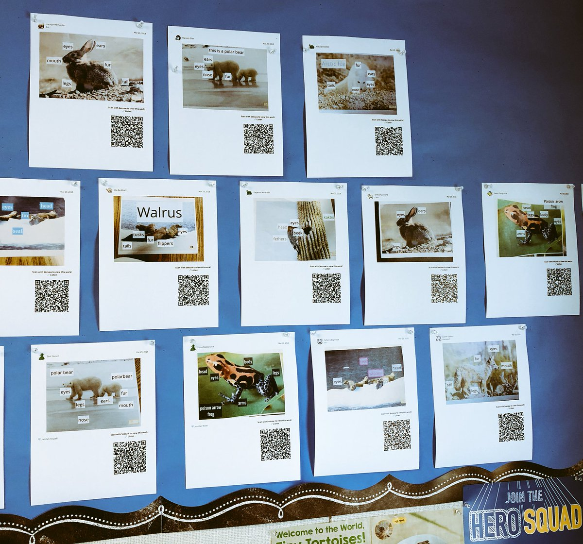 hight resolution of  in 1st grade at lynhaven traditional student work wall becomes interactive had fun listening to student s explain their diagrams via qr codes