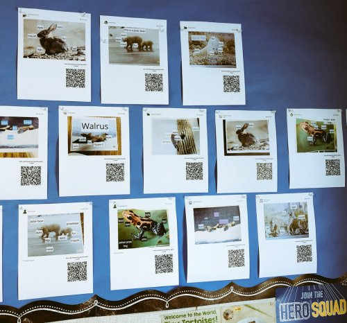 small resolution of  in 1st grade at lynhaven traditional student work wall becomes interactive had fun listening to student s explain their diagrams via qr codes