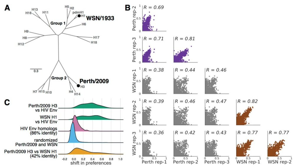 medium resolution of virus evolution