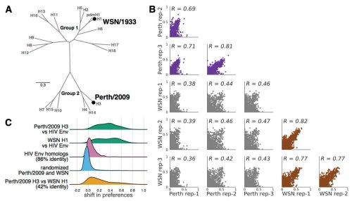 small resolution of virus evolution