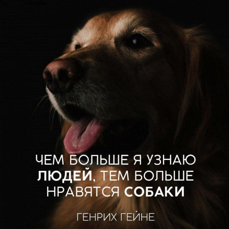 бюджетный, статусы и картинки про собак ручные декоративные