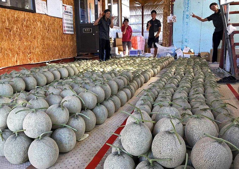 test ツイッターメディア - 初物メロンがいっぱい。とぉーっても幸せだー!たくさんメロンが採れましたー\(^o^)/腰がイタイのも我慢できるよっ! 寺坂農園(メロン畑)で販売中ですので、いつでもご来園くださいー♪ https://t.co/U6M79cSH4b #寺坂農園 #今日はもう収穫作業でヨレヨレ #富良野メロン https://t.co/yETDpU5P2X
