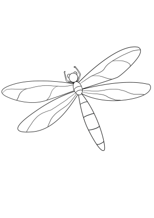 dragonfly drawing draw easy simple fly step dragon looking sketch guides dragonflies beginners insect realistic learn colouring mermaid animals