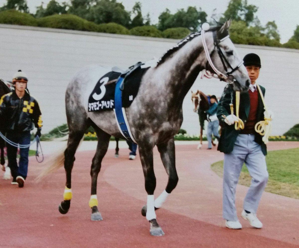 test ツイッターメディア - 懐かしい写真集 タマモゴーアヘッド 父はタマモクロス 引退後は小倉競馬場で誘導馬をしていました🐎 https://t.co/HU0wOHNAlL