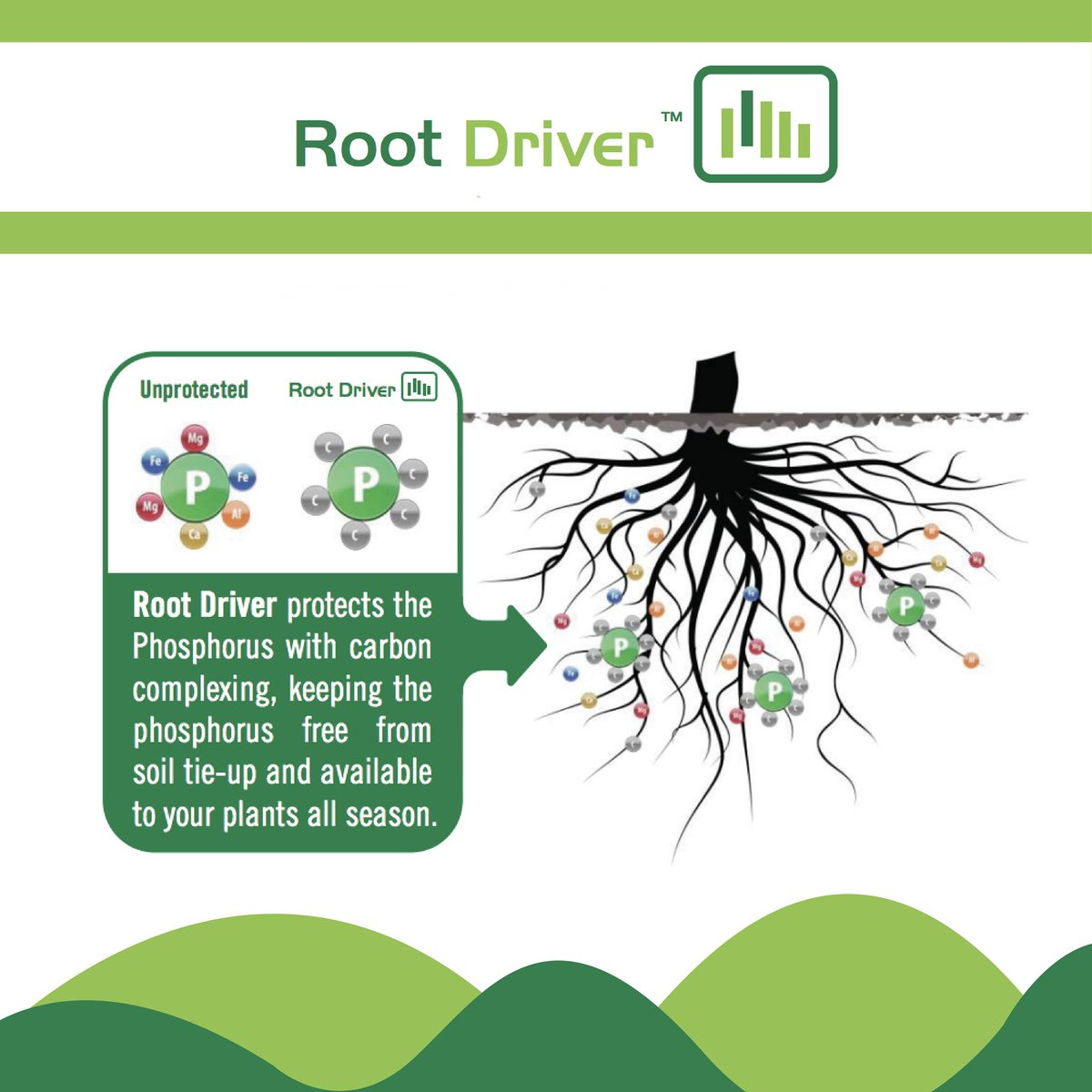 Less Root