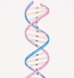i never understood what the dna means now yyxy may have the answer get ready for some crackhead theory thread pic twitter com tfl2x0wog0 [ 750 x 1199 Pixel ]