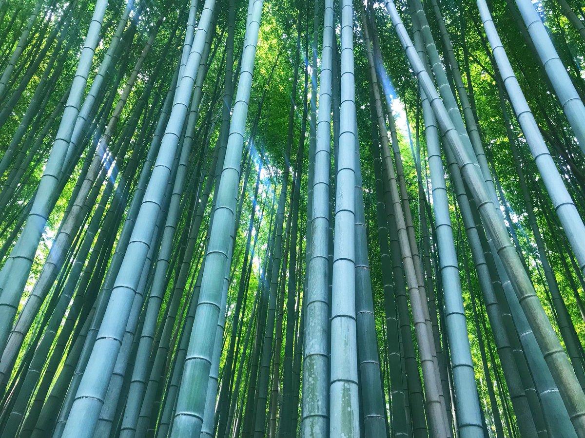 test ツイッターメディア - シロとクロのツアー京都編。 たくさん曲聴けたし1人だったけど 友達できたしヨルマチダイスすごく 楽しかったし熱々な夜でした◎ 清水寺とか鈴虫寺とか嵐山とか その他たくさん観光もしてきて 心清められた気がします。良き休日。 https://t.co/oENbGhyCq0