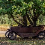 Ewan Morrison On Twitter Trees Growing Through Cars For Unknown Reasons Trees Seem To Like The Apocalypse Style Of Growing Through Abandoned Vehicles Why Good Protection For Seedlings If You Have Any Ideas